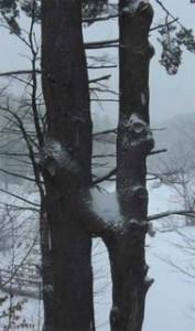 Double H Trees