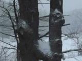 double-h-trees